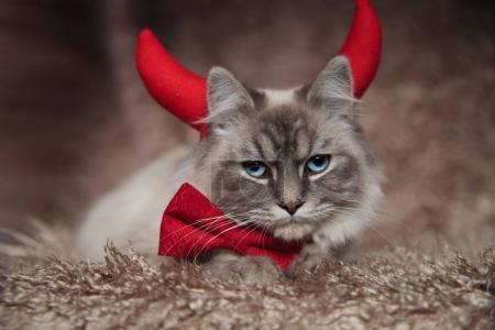 evil elegant cat wearing devil horns