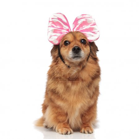 surprised brown dog with pink bow headband looks to side