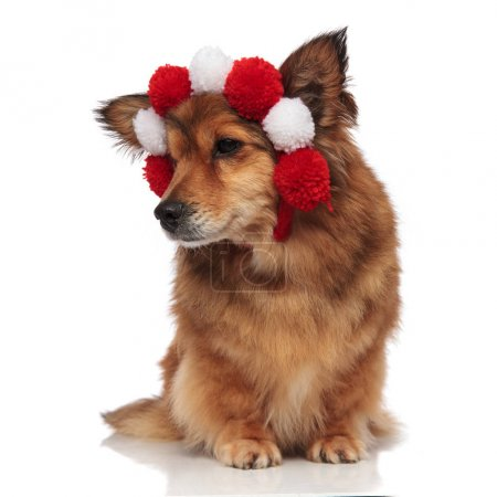 curious brown dog with fluffy white and red balls headband