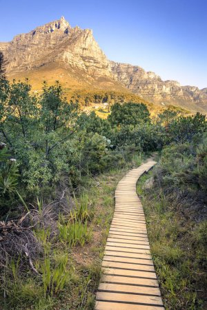 Hiking trail in Cape Town