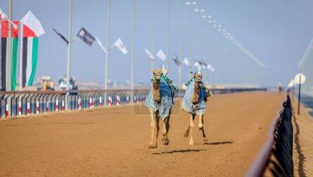 Camels with robot jokeys
