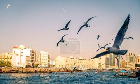 Seagulls over Dubai Creek