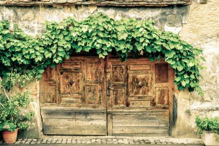 Door under grape vine