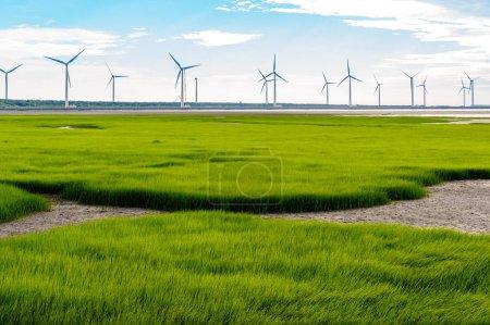 gaomei wetland in taichung