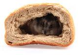 Dsungarische Zwerghamster im Brot