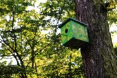 homemade bird home on the old tree