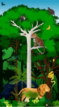 Vector Illustration african jungle rainforest with animals