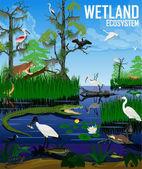 Vector wetland ecosystem illustration