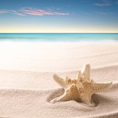tropical starfish laying on beach sand