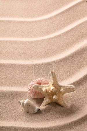 starfish and seashell lying on beach sand