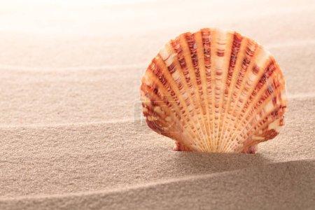 seashell lying on sand