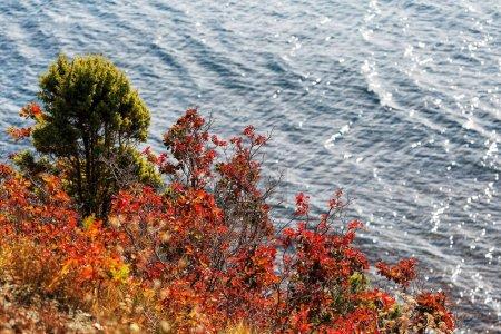 Photo pour Forêt d'automne au bord de la mer, contraste entre forêt d'automne et mer - image libre de droit