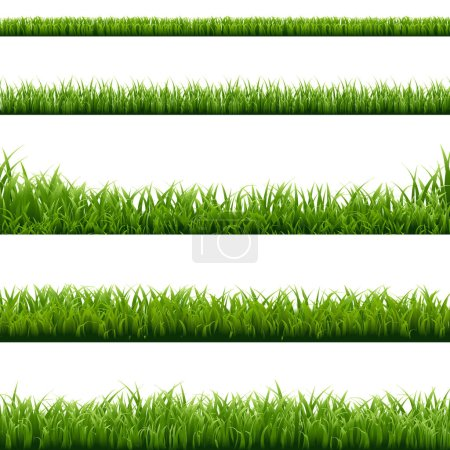 Illustration for Set of Green Grass Borders, Vector Illustration - Royalty Free Image