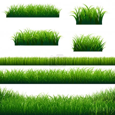Illustration for Set of Green Grass Borders, Vector Illustration - Royalty Free Image