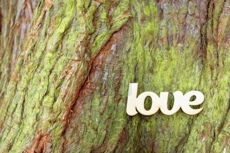 Wooden love sign on tree trunk background