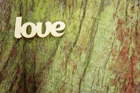 Wooden love sign on tree trunk texture