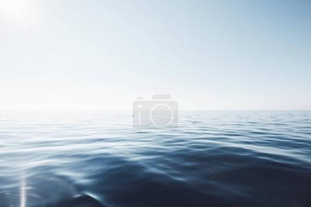 Dolphin in peaceful sea
