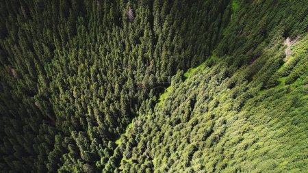 Photo pour Forêt de conifères sur les pentes montagneuses. vue de dessus - image libre de droit