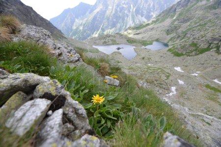 Photo pour Pentes et sommets de montagnes et de ciel bleu paysage - image libre de droit