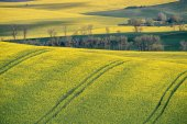 Spring farmland on hills of South Moravia. Czech green and yellow spring fields. Rural agriculture scene