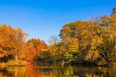 autumn forest landscape.  Golden autumn scenery. Autumn. Fall. Autumnal Park. Autumn Trees and Leaves