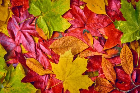 background of autumn leaves. Autumn background