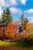 Beautiful  autumn forest.  forest landscape