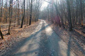 empty road in autumn forest