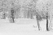 Beautiful snowfall in the park