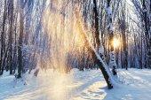 Sunrise in a snowy park