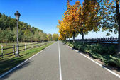 Bicycle road in a park