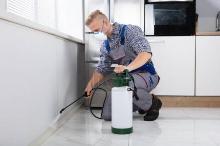 Pest Control Worker Spraying Pesticide On Wall With Sprayer In Kitchen