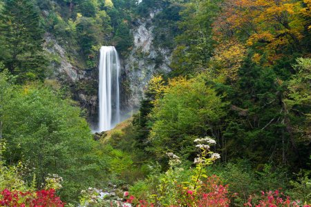 Waterfall in Japanese autumn forest