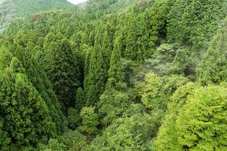 Photo pour Vue de dessus de la forêt verte - image libre de droit