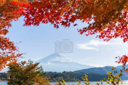 Maple trees and mountain Fuji