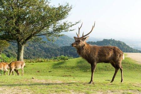 Deers and natural landscape