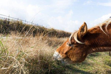 Horses eating fresh hay