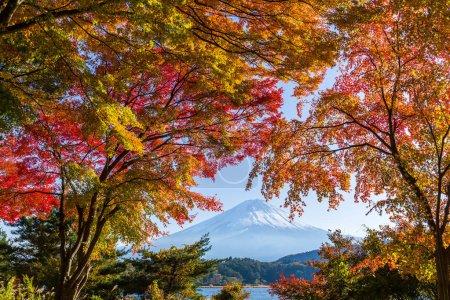 Mountain Fuji with maple trees