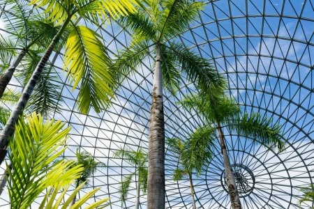 Greenhouse garden with palms in Japan