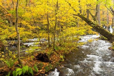 Photo pour Ruisseau de montagne Oirase au Japon - image libre de droit