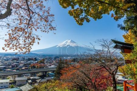 Mountain Fuji and maple trees