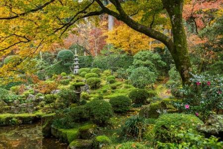 Japanese garden with autumn maple trees