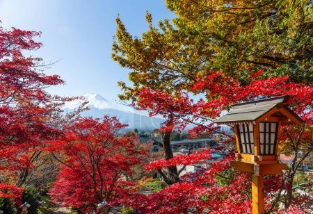 Red maple trees and mount Fuji