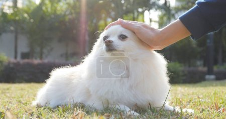 Woman touching her Pomeranian dog in the park