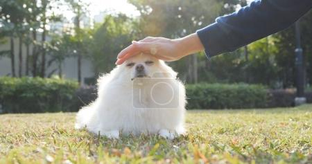 Pet owner touching her Pomeranian dog in the park