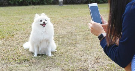 Photo pour Femme utilisant un téléphone portable pour prendre des photos sur son chien - image libre de droit