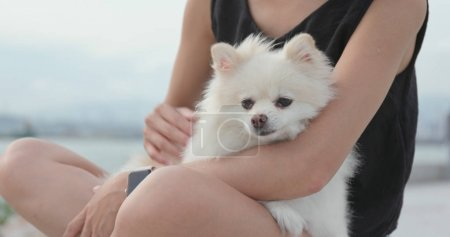 Pet owner touching on White pomeranian dog at outdoor