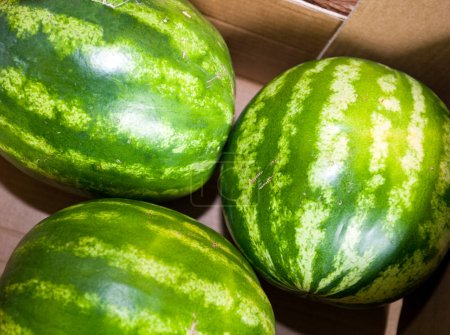 Photo for High angle view of watermelons in grocery store - Royalty Free Image
