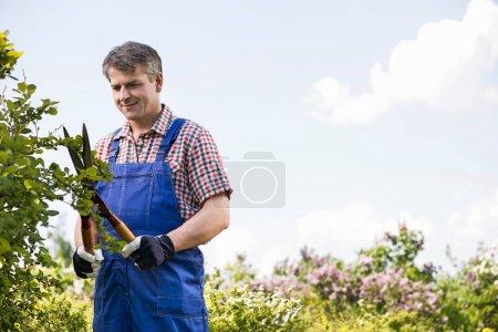 Gardener cutting branches