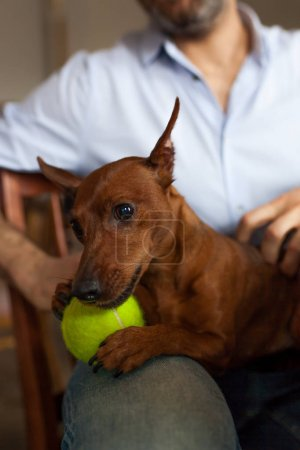 dog is resting with its owner playing with beloved ball